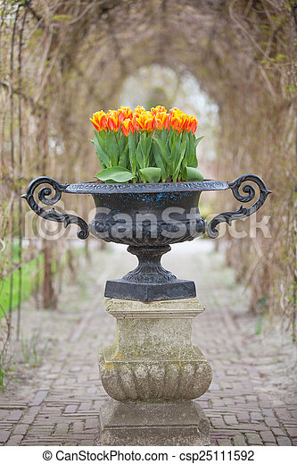 Field of colorful tulips - csp25111592