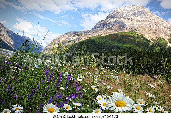 Field of daisies and wild flowers - csp7124173