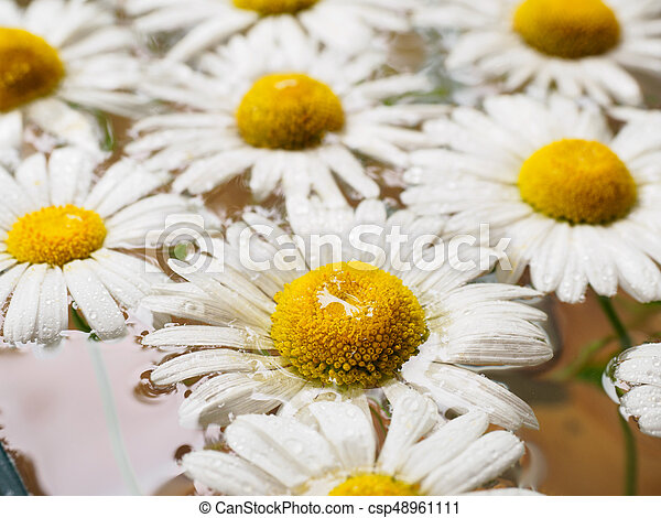 Field of daisies floating in the water chamomile with drops of field of daisies floating in the water chamomile with drops of water flowers with white petals and yellow pistils photographed closeup with soft focus on mightylinksfo