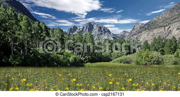 Field of Flowers in the Eastern Sierras - csp2167131