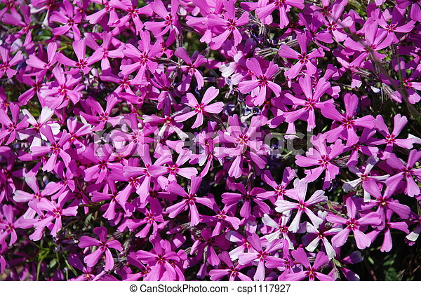 field of flowers - csp1117927