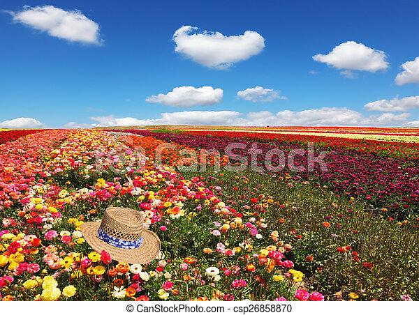 Field of flowers  - csp26858870