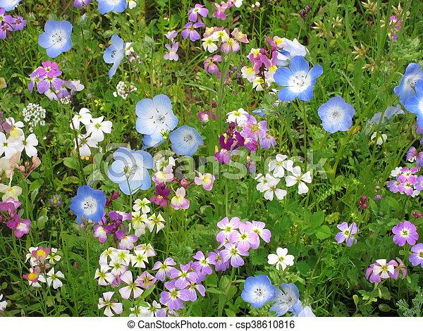 Field of flowers - csp38610816