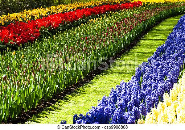 field of flowers - csp9908808