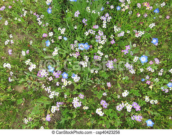 Field of flowers - csp40423256