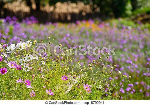 Field of flowers. - csp16792941