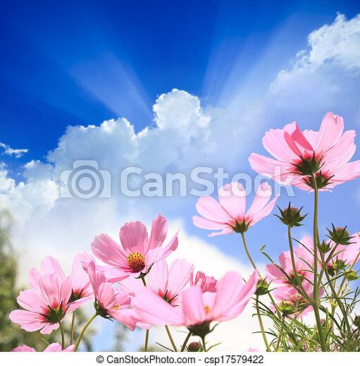 Field of flowers - csp17579422