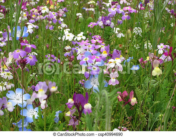Field of flowers - csp40994690