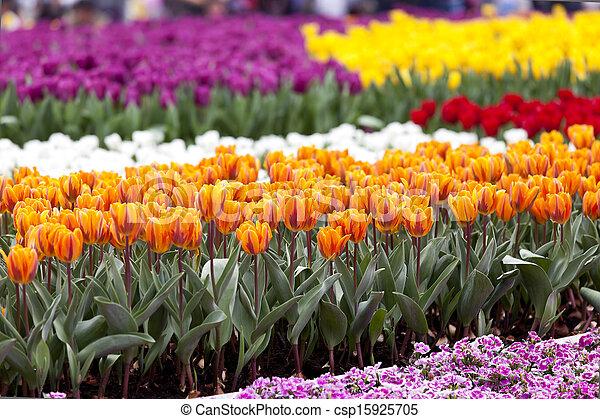 Field of flowers - csp15925705