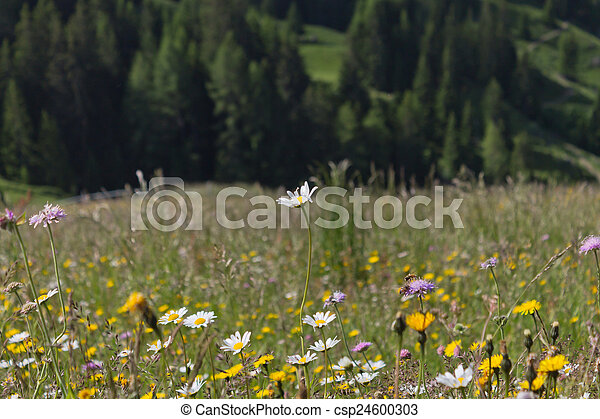 Field of flowers - csp24600303