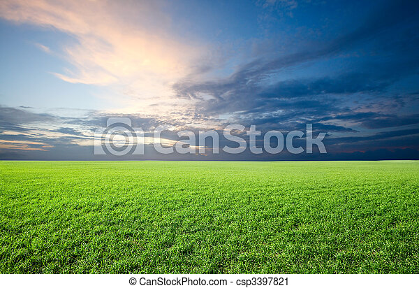 Field of green fresh grass under blue sky - csp3397821