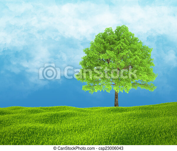 Field of green grass and sky with one tree. - csp23006043