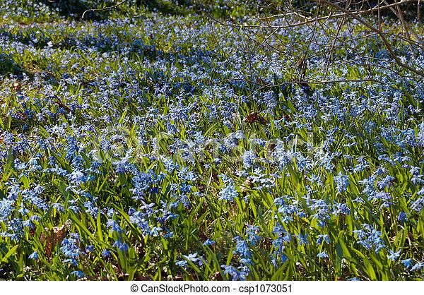 Field of Hepatica - csp1073051