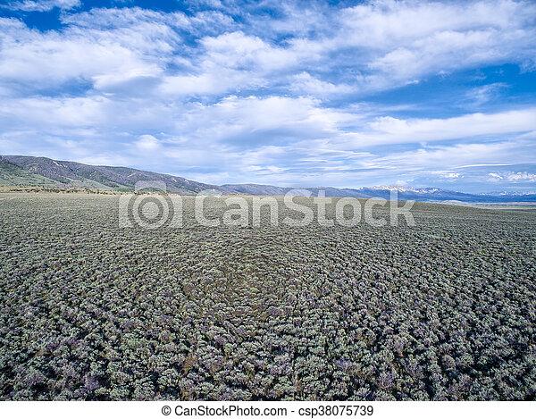 field of sagebrush aerial view - csp38075739