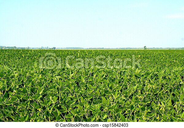 Field of soybean - csp15842403