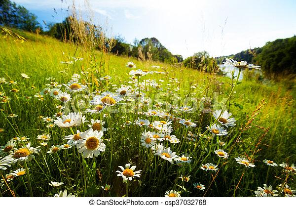 Field of spring flowers - csp37032768