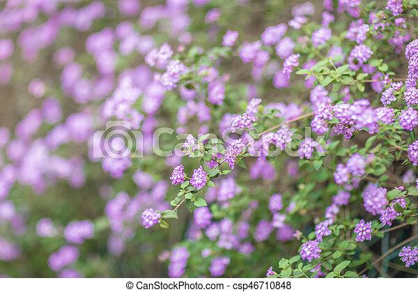 Field of tiny purple flowers in spring field of tiny purple flowers csp46710848 mightylinksfo
