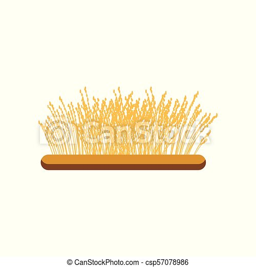 Field of wheat vector Illustration on a white background - csp57078986