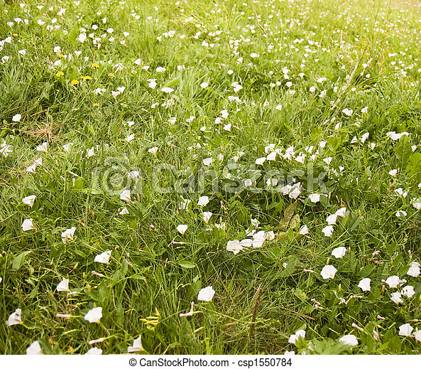 Field of white flowers a green field covered in white wildflowers field of white flowers csp1550784 mightylinksfo