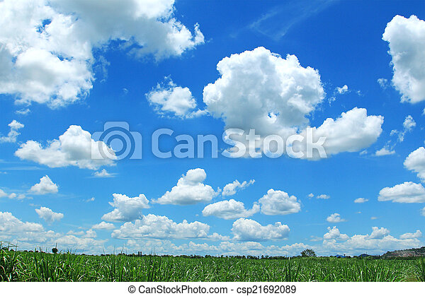 Field on background of the blue sky - csp21692089