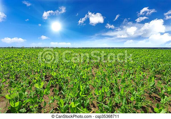 field - csp35368711