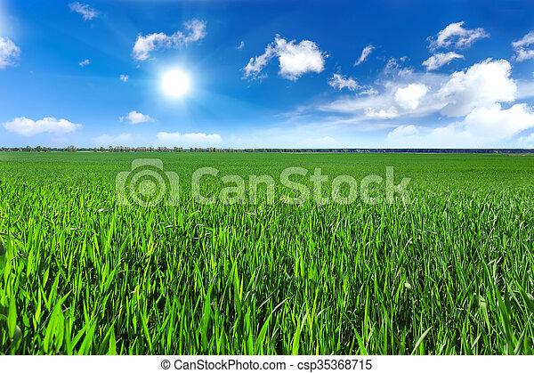 field - csp35368715