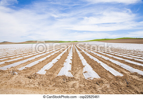 field plastic stripped - csp22825461