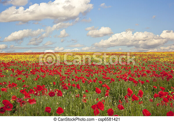 field poppies - csp6581421