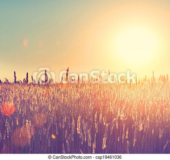 Field. Rural Landscape under Shining Sunlight - csp19461036