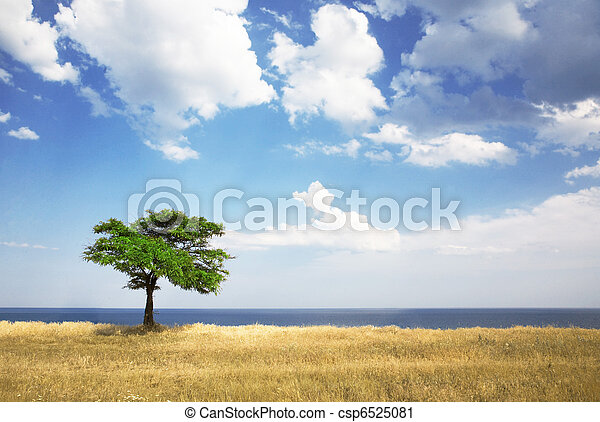 Field, tree, sea - csp6525081