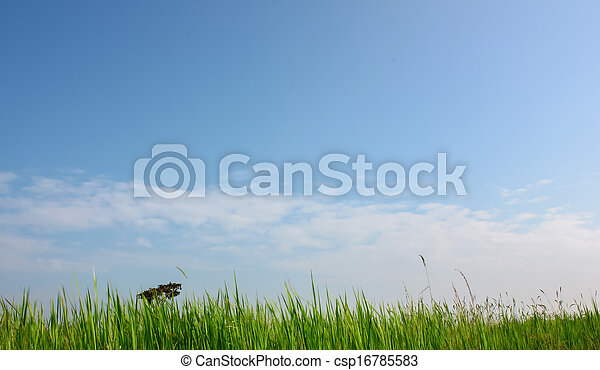Field with blue sky - csp16785583