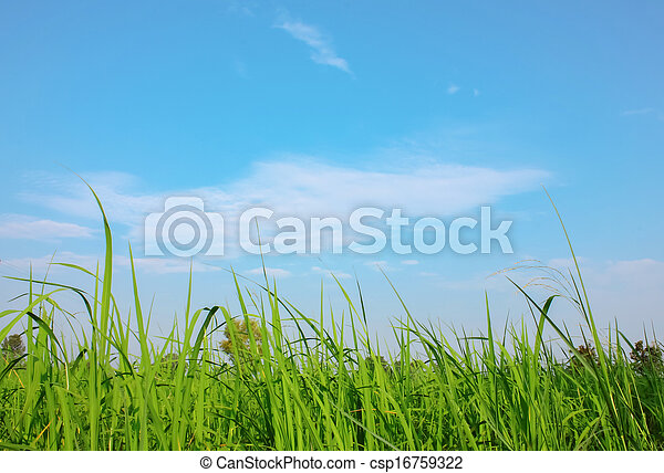 Field with blue sky - csp16759322