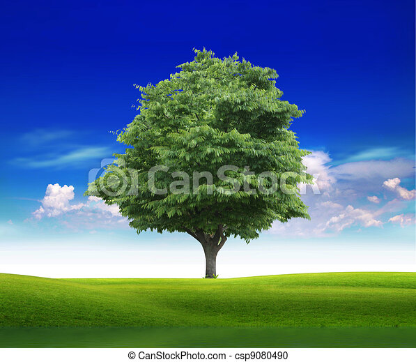 Field with green grass and tree  - csp9080490