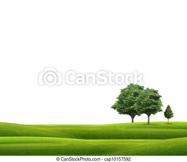 Field with green grass and tree  - csp10157592