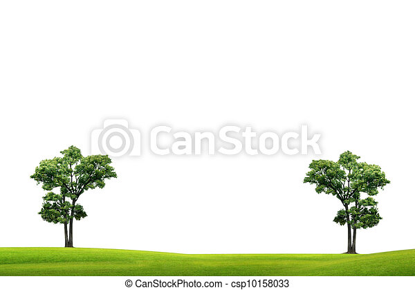 Field with green grass and tree - csp10158033
