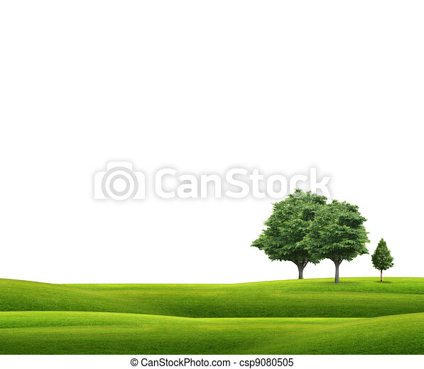Field with green grass and tree  - csp9080505