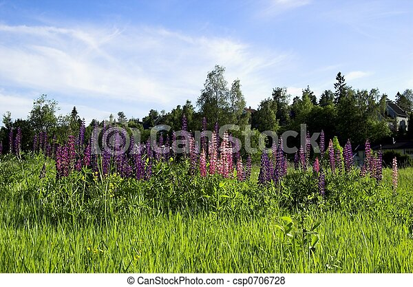 Field with Lupins - csp0706728