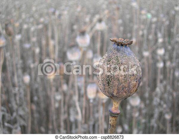 Field with rape poppy - csp8826873