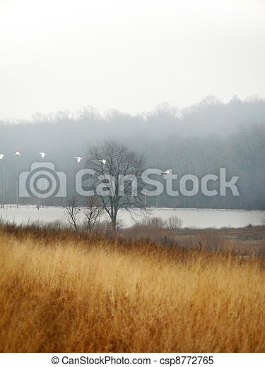 field with swans - csp8772765