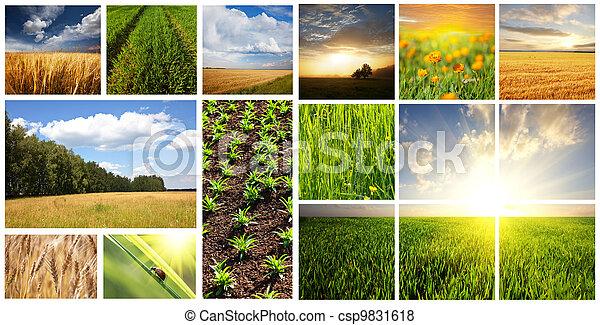 Fields collage - csp9831618