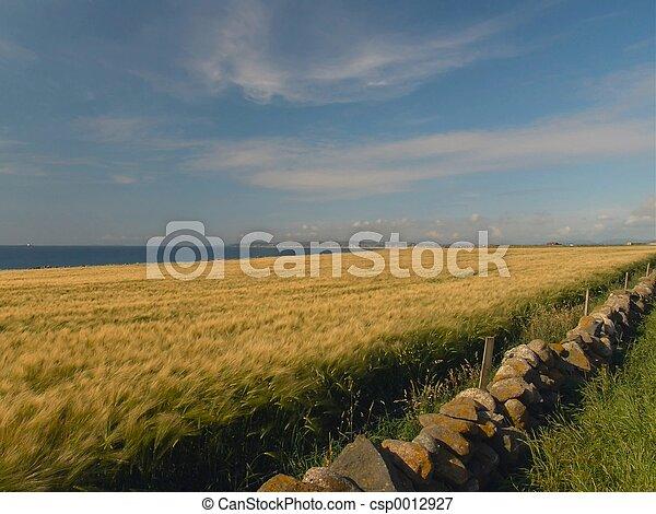 Fields of barley - csp0012927