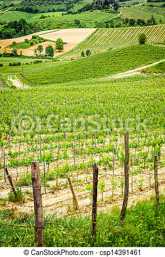 Fields of grapes in Italy - csp14391461