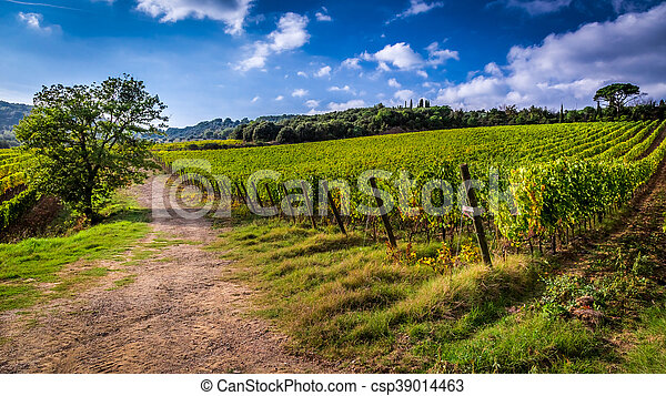 Fields of grapes in Italy - csp39014463