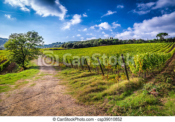 Fields of grapes in Italy - csp39010852