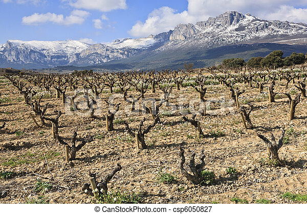 Fields of vineyards - csp6050827