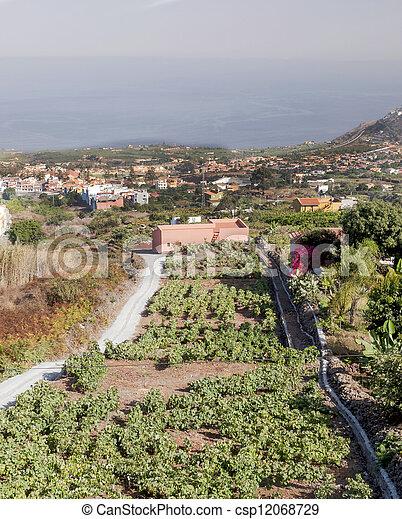 Fields of vineyards - csp12068729