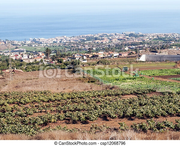 Fields of vineyards - csp12068796