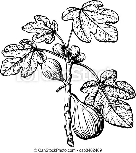 Fig - csp8482469