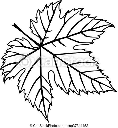 fig leaf - csp37344452