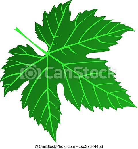 fig leaf - csp37344456
